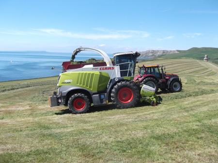 Grass Silage 2