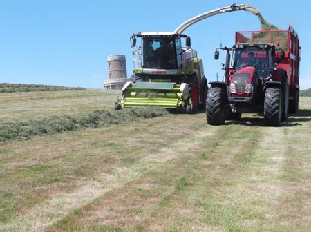 Grass Silage 6
