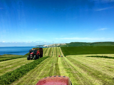 Silaging grass full trailer